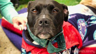 Monmouth County SPCA dog walk & pet fair 2019 6 of 95