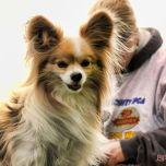 Monmouth County SPCA dog walk & pet fair 2019 72 of 95