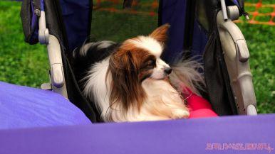 Monmouth County SPCA dog walk & pet fair 2019 74 of 95