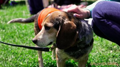 Monmouth County SPCA dog walk & pet fair 2019 87 of 95
