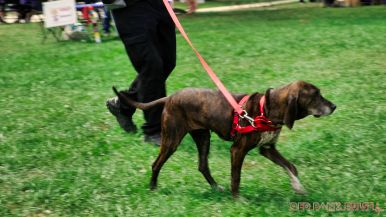 Monmouth County SPCA dog walk & pet fair 2019 91 of 95