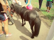 jimmy the pony.