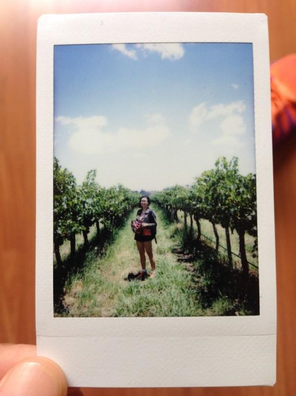 pieter winery