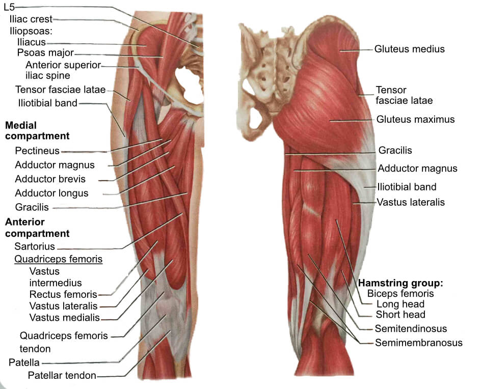 Adductors | Adductor Stretch