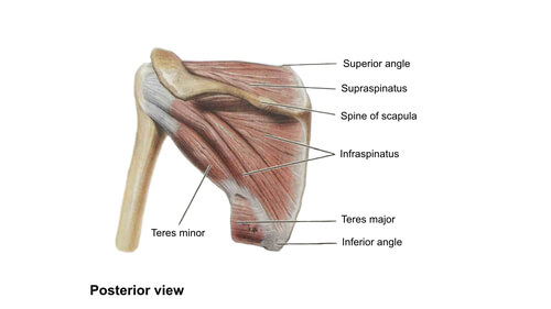 Shoulder Rear View | Shoulder Stretches