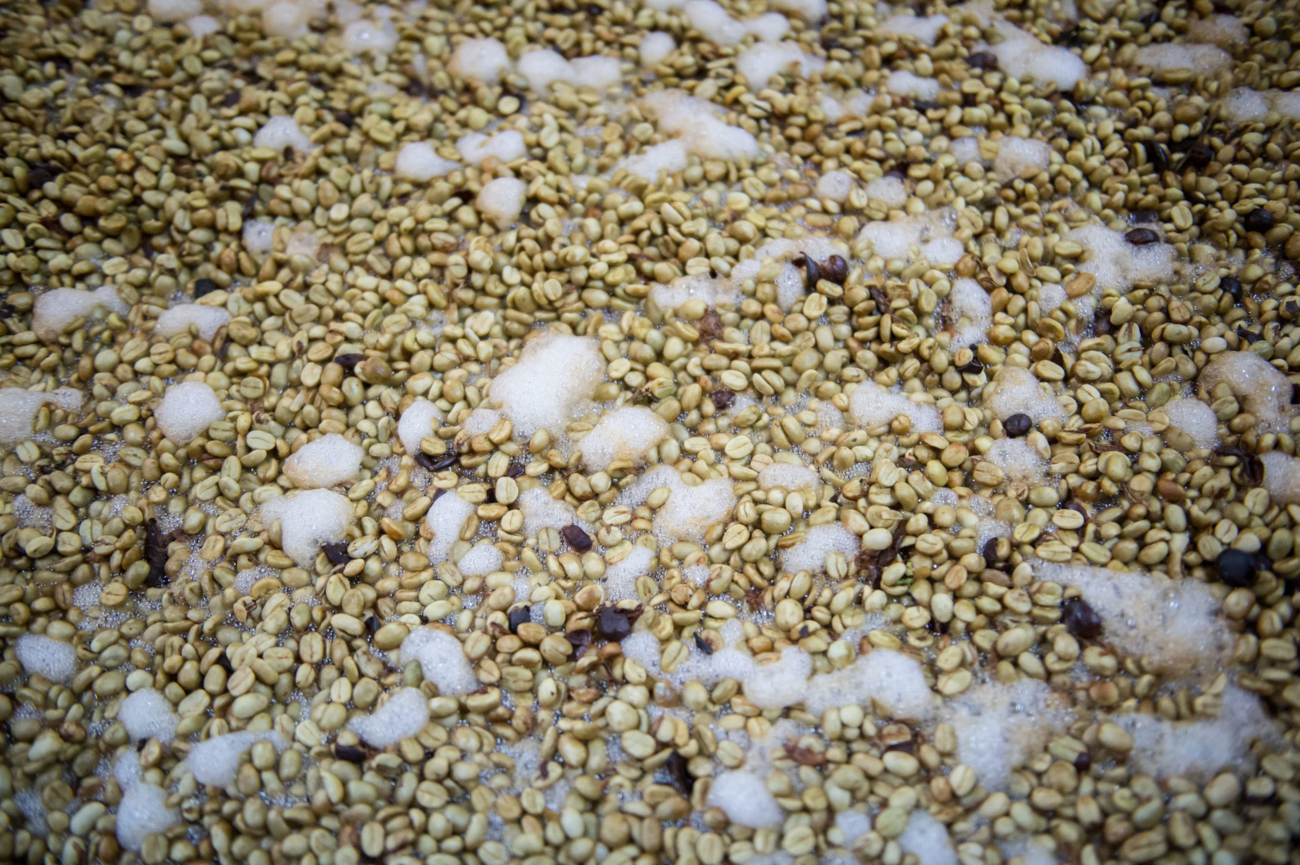 Coffee seeds being fermented