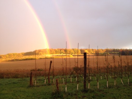 double rainbow over new orchard