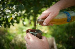 cider trials