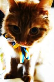 Наш талісман, кіт Фокс