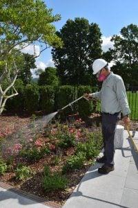 tree service fertilization
