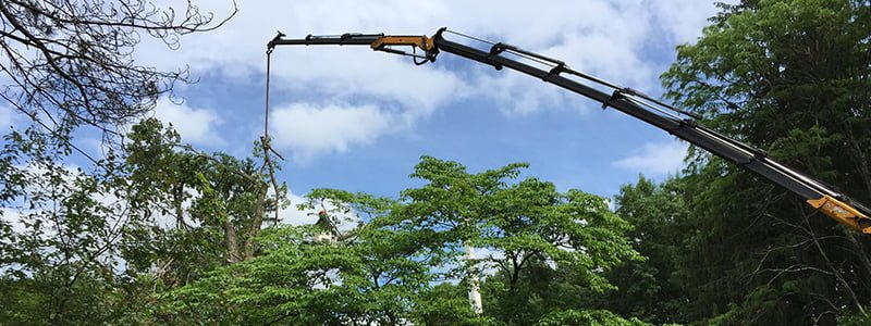 arborist professional tree services