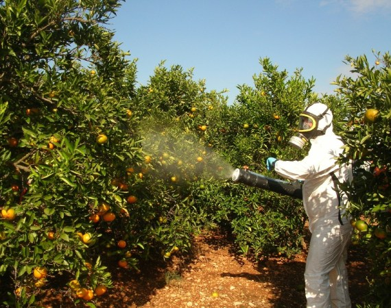Curso puente fitosanitario cualificado 35 horas Palma de Mallorca