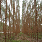 Forest definition challenged in Poznan