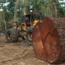 Climate negotiations drowning in a sea of brackets: Forest protection missing