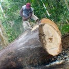 PNG government does not support Voluntary Carbon Agreements. PHOTO: foei