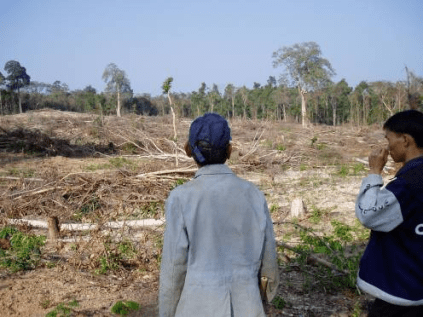 """""""If the villagers cut the big forest like this, we would go to jail."""" January 2006, Ban Pak Veng."""