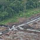 Scientists' letter to Norway and Indonesia: Natural forests, even when not in their primary state, may have high conservation value. PHOTO: Greenpeace