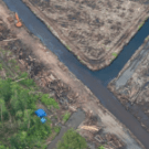 Indonesia delays moratorium on forest concessions. PHOTO: Greenpeace