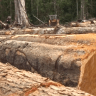 Bikpela bagarap: New film about destructive logging in Papua New Guinea