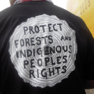 Implement safeguards on REDD Plus, indigenous caucus demands