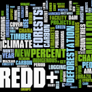 REDD in the news: 20-26 August 2012