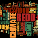 REDD in the news: 26 November - 2 December 2012