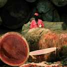 World Bank management rejects criticisms of industrial logging