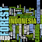 REDD in the news: 18-24 March 2013