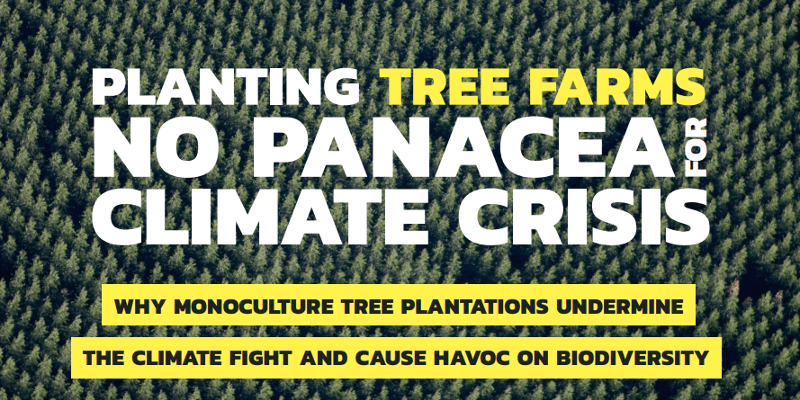 Planting Tree Farms No Panacea for Climate Crisis