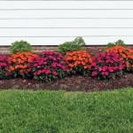Mulch Vs Rocks Reddi Lawn Maintenance