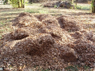 Shredded leaf piles used in Dee Nash's gardens all year.