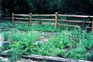 1999-garden2-001.jpg