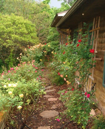 Side rose border with pecan hull mulch. Red Dirt Ramblings--Dee Nash