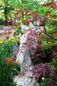 Acer palmatum 'Crimson Queen' in the front border.