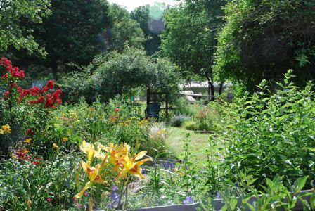 Ten Plants To Replace Climbing Roses Red Dirt Ramblings