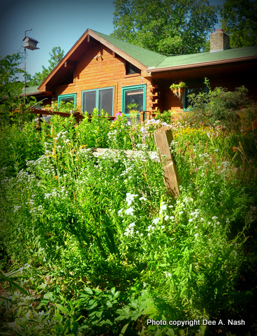Mountain mint and our house.