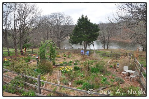 Overview of the back garden in spring.
