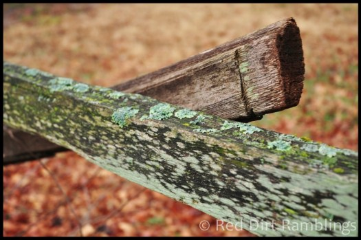Lichens on fences bring winter color