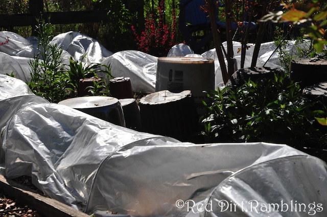 I only used row covers where I had a lot of space involved. For single plants, plastic pots are great.