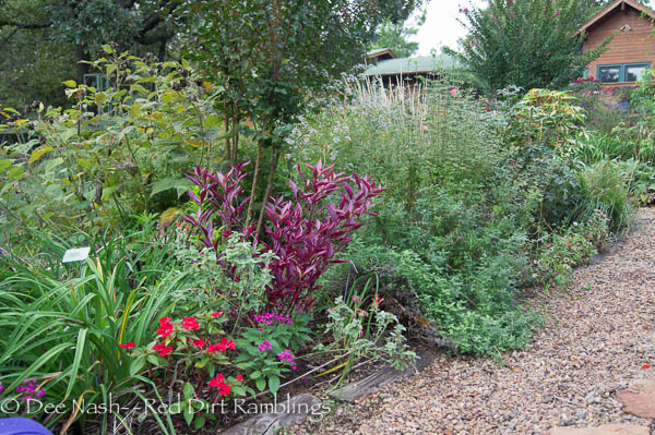 'Brazilian Red Hot' alternanthera, red Sunpatiens, purple pentas crapemyrtle Pink Velour, perennial hydrangeas, grasses all make the fall garden beautiful.