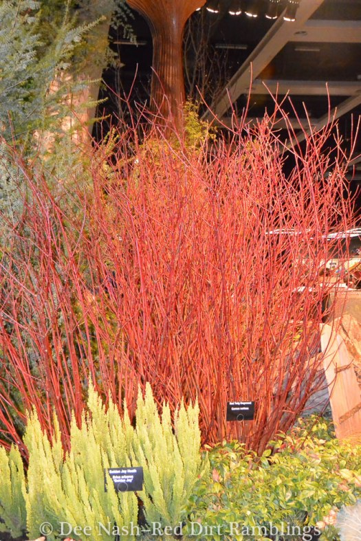 Fire and ice in this display garden.