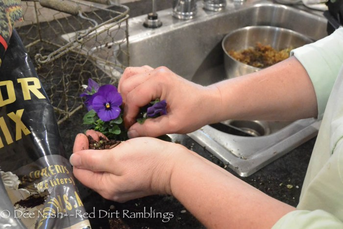 Fill the top of the teacup with potting soil.