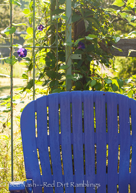 Purple chair with 'Grandpa Otts' morning glory
