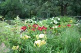 'Annabelle' blooming behind daylilies.