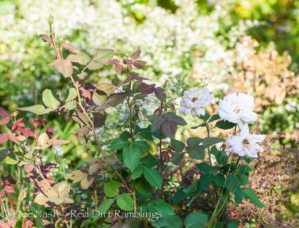 April Moon rose