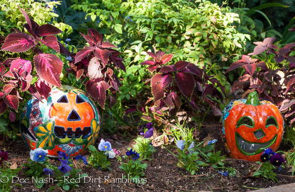 New Talavera pumpkins with Delta Mixed Berry Tart pansies and 'Kingswood Torch' coleus on the left and 'Gnash Rambler' on the right.