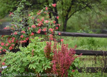 Hydrangea quercifolia 'Ruby Slippers,' Berberis thunbergii 'Orange Rocket,' Lonicera sempervirens, American honeysuckle, the 2014 Wildflower of the Year.