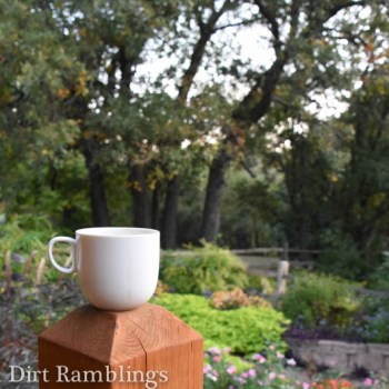 Tea cup on fence post; October state of mind