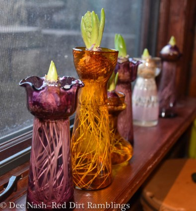 Hyacinth vases in the window.