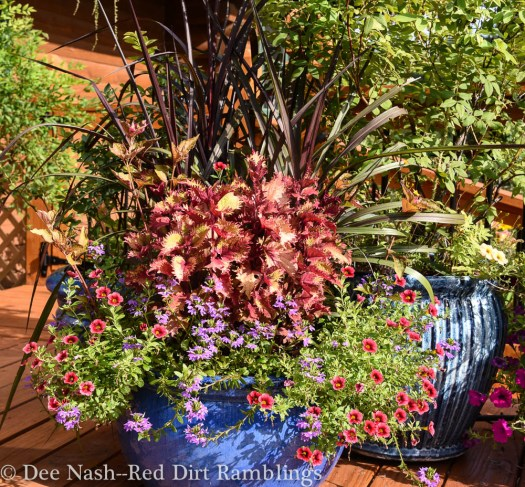 One of my pots on the deck with 'Henna' coleus, 'Princess Caroline' grass and some trailing plants.